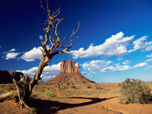 becoming a paralegal in arizona